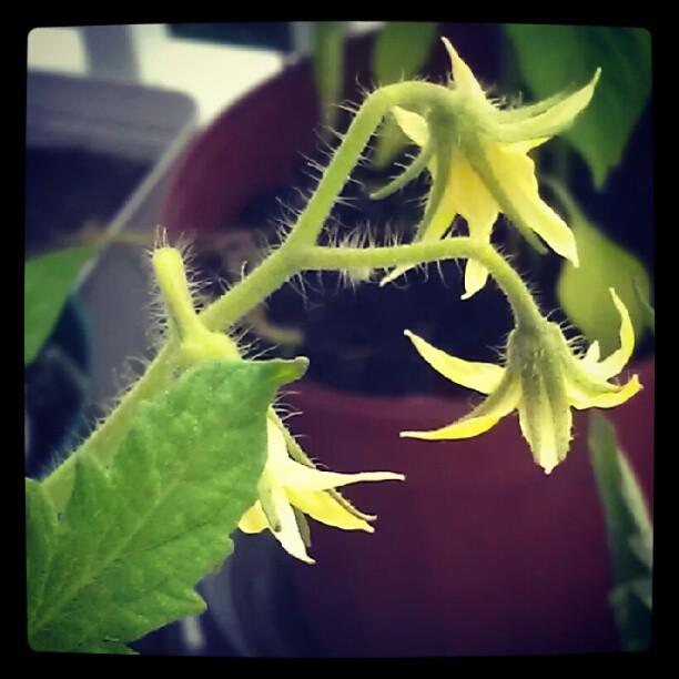 Garden = V...I...C...T...O...R...Y...! (4/5)