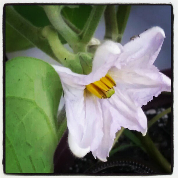 Garden = V...I...C...T...O...R...Y...! (2/5)