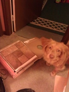My helper with my flooring.