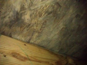 If you are not sure what this is it is mold and some wet rot ( a Preservationists nightmare).