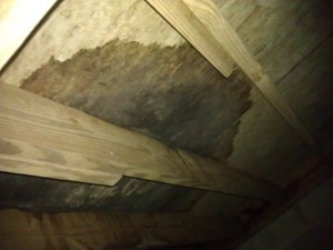 Thinking a new subfloor