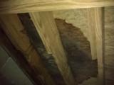 The Moldy Floor