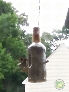 Birds eating out of the feeder.  I am sorry for the quality I took it through my (very dirty) kitchen window with my phone.