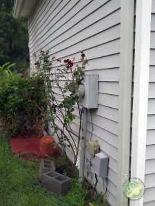 Moved the rose bush (in the rain)