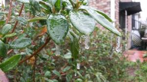 More ice on plants